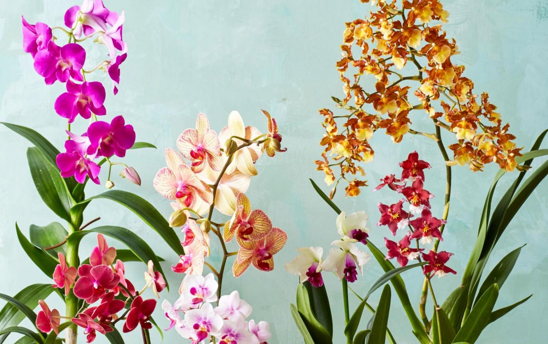 Szeretnéd, hpgy újra virágozzon az orchideád? Próbált ki ezt a módszert!