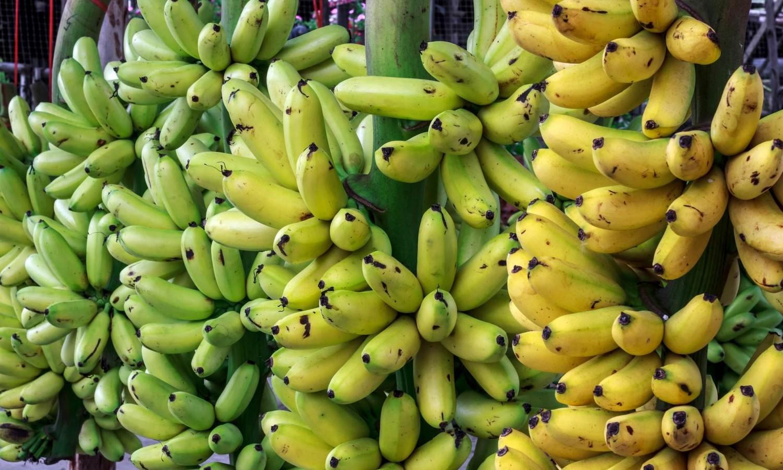 Nézd meg ezt a videót, és többet nem eszel banánt!